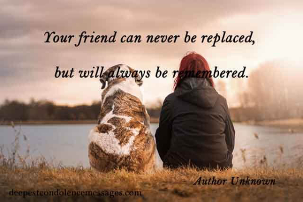 Losing Your Pet Quotes